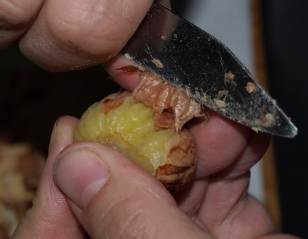Chestnuts 6