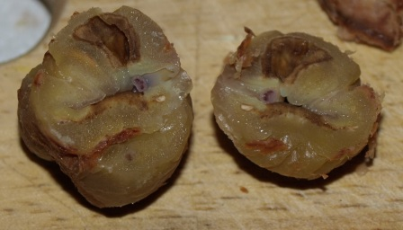 Chestnuts 9