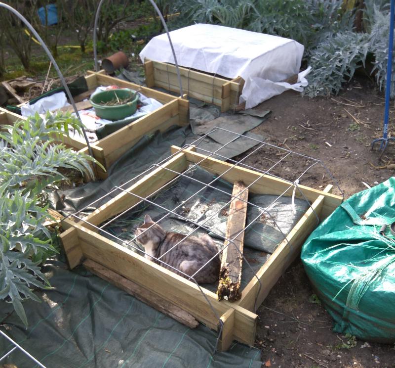 Gardening perils