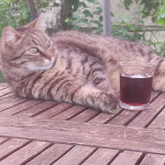 Zola drinks sangria