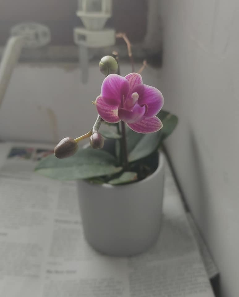 That orchid