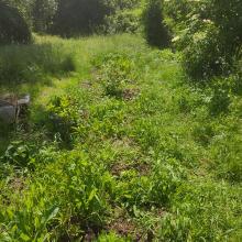 Nascent herbaceous border