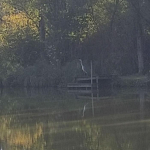 Distant heron